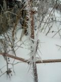 Frozen red berries on rowen tree covered with frost. royalty free stock photo