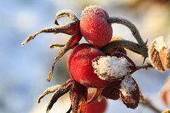 Frozen red berry Royalty Free Stock Photos