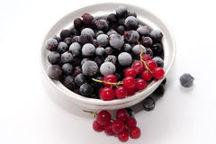 Frozen red and black currants Stock Photography