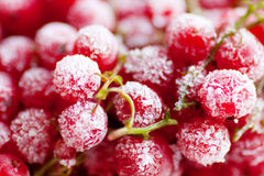 Frozen red currant berries. Royalty Free Stock Image