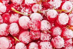Frozen red currant berries. Stock Photo
