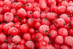 Frozen red currant. Close-up stock image