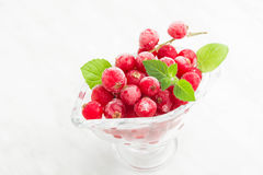 Frozen red currant with mint Stock Image
