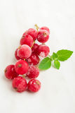 Frozen red currant with mint, selective focus Stock Images