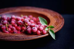 Frozen red currant with a sprig of mint in a decorative red buck Stock Images
