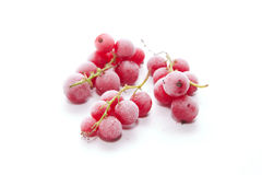 Frozen red currants Stock Image