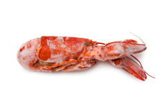 Frozen red lobster Stock Images