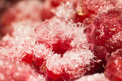 Frozen red raspberries macro Royalty Free Stock Images