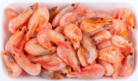 Frozen red shrimps in white plastic box Stock Photography