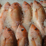 Frozen Red Snapper Fish Stock Photos