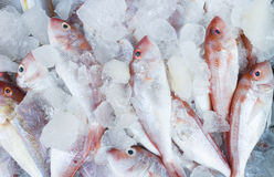 Frozen Red-Snapper. In the market, Thailand Stock Photos