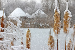 Frozen reeds and grass Royalty Free Stock Images