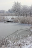 Frozen reeds and grass Stock Image