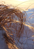 Frozen reeds and hay, winter concept Stock Photos
