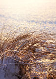 Frozen reeds, winter season concept Stock Photo