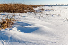 The frozen river with a dry cane on the island Royalty Free Stock Photography