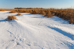the frozen river with a dry cane on the island Stock Photo
