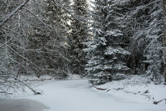 FROZEN RIVER IN FOREST Stock Images