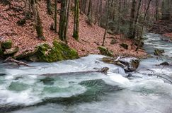 Frozen river in forest with no snow. Undefined nature condition Stock Photography