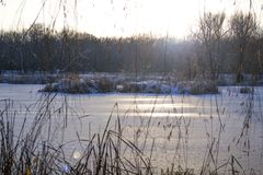 Frozen river. Island of reeds. The sun stock image