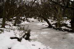 Frozen river in Los Glaciares National Park, Argentina Royalty Free Stock Photography