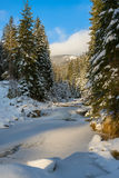 Frozen river between snow covered fir trees Royalty Free Stock Photo