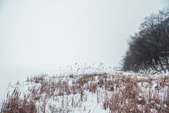 Frozen River in the snow with a view of the coast from reeds.  Royalty Free Stock Photography
