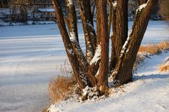 Frozen river with tree Stock Photography