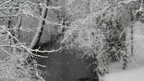 Frozen river in the winter with snow. Frozen river in winter time with snow. Closeup trees with snow stock footage