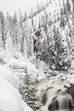 Frozen river in Yellowstone National Park during Winter Stock Images