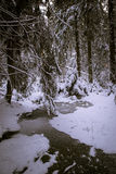 Frozen Rivulet Royalty Free Stock Photos