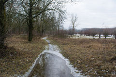 Frozen road in forest near the winter field Stock Photography