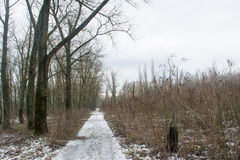 Frozen road in the winter forest Royalty Free Stock Image