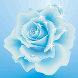 Frozen Rose. Vector Beautiful Frozen Rose on the Sky Blue Background Royalty Free Stock Photo