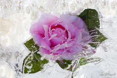 Rose inside ice Royalty Free Stock Photo
