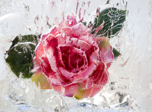 Rose inside ice Royalty Free Stock Photos
