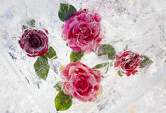 Rose inside ice Royalty Free Stock Image
