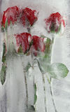 Frozen Roses Royalty Free Stock Images