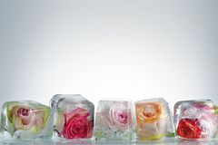 Frozen Roses In Ice Cube Royalty Free Stock Photos