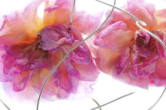 Frozen Roses and Wire Royalty Free Stock Photography