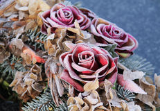 Frozen roses on the wreath Stock Photo