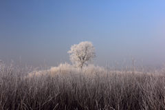 Frozen rural landscape Royalty Free Stock Photos