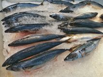Frozen Saba fish on the ice. Royalty Free Stock Photography