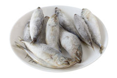 Frozen sardines Stock Photography