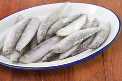 Frozen sardines Stock Image