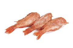 Frozen sea bass on white. Three red frozen sea bass without a head isolated on white background stock photo