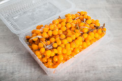 Frozen sea buckthorn Stock Image