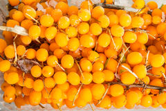 Frozen sea buckthorn Royalty Free Stock Photos