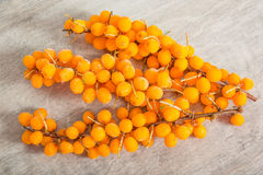 Frozen sea buckthorn Royalty Free Stock Photography