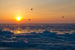 Frozen sea at early morning Royalty Free Stock Photography